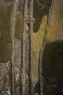 Realms of the Surface: Lacebark Pine | 表面的世界:白皮松系列